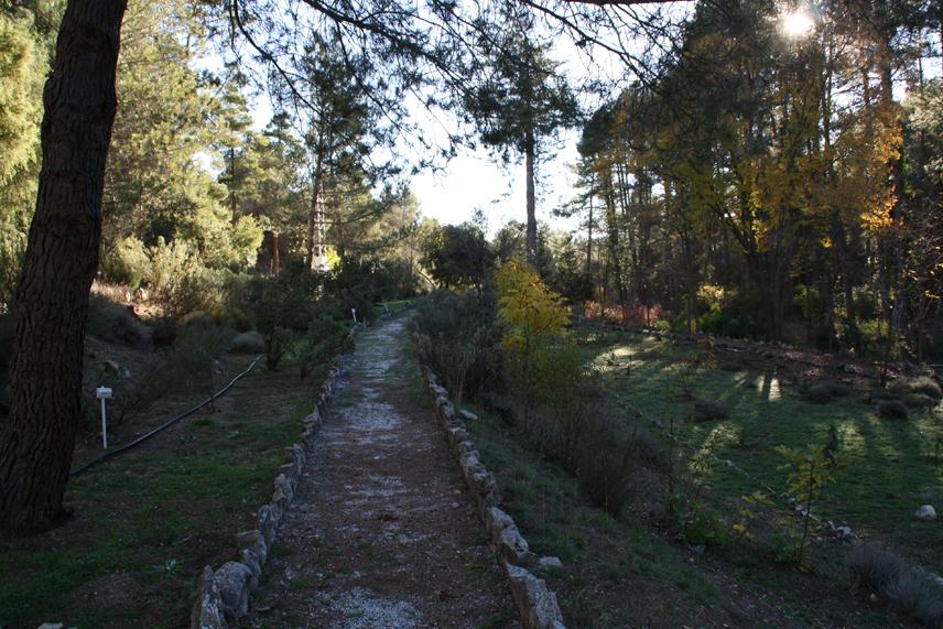 Jard n bot nico el hornico turismo bot nico for Jardin botanico albacete