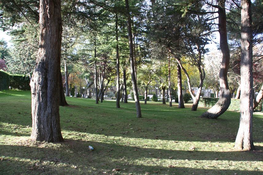 Alameda de Cervantes. Arbolado urbano