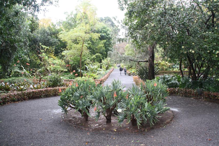 Jard n de aclimataci n de la orotava turismo bot nico for Jardin botanico almeria