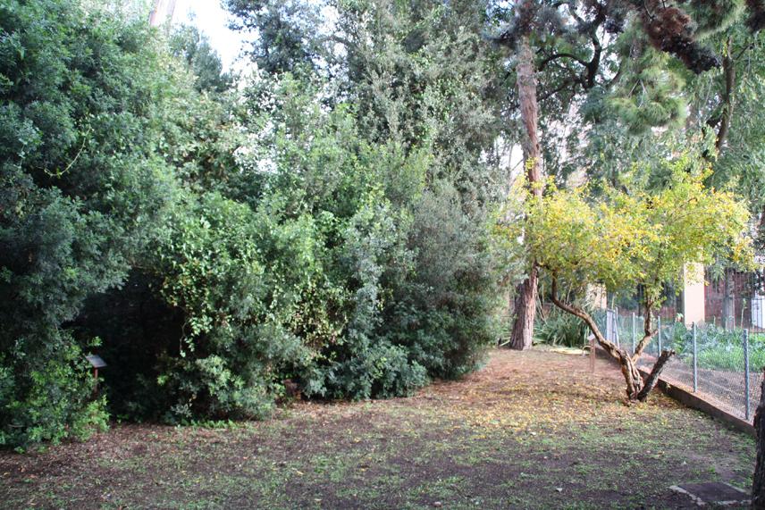 Jard n bot nico de gav turismo bot nico for Jardin botanico albacete