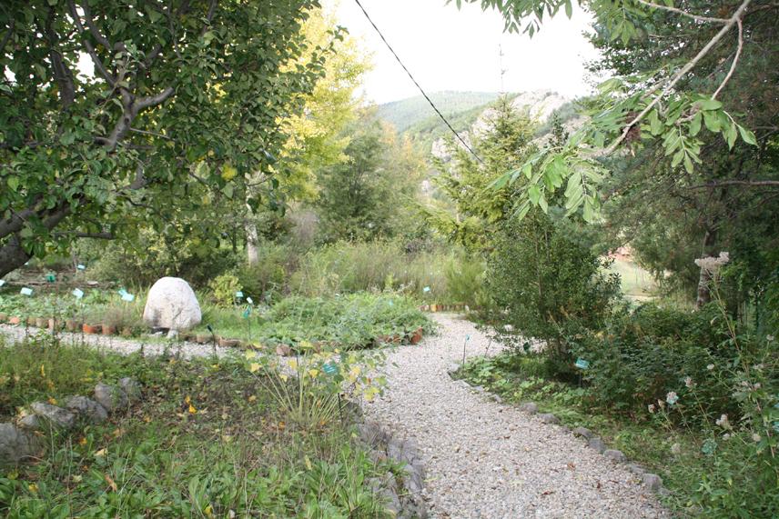 Jard n bot nico de plantas medicinales de gombr n for Jardin botanico medicinal