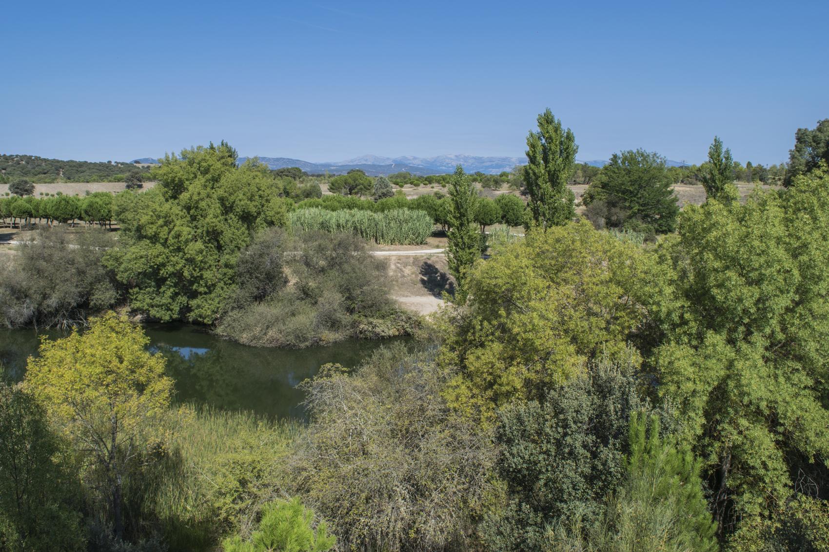 Ruta el jard n m gico de el pardo madrid turismo bot nico for Vegetacion ornamental