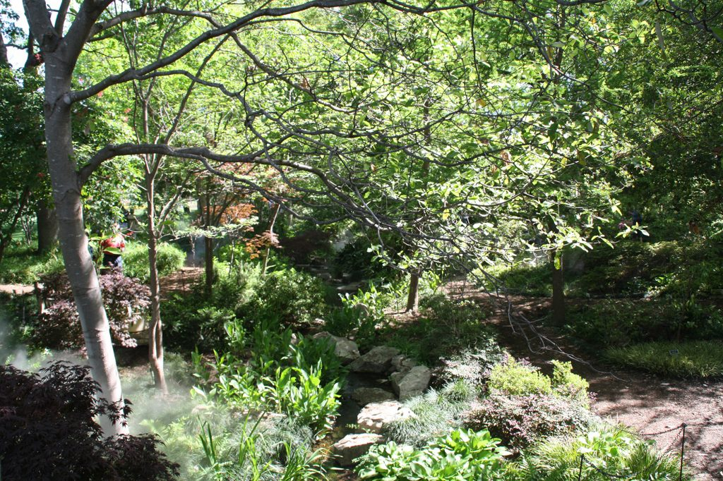 El Arboretum de Dallas me esperaba sin tene muy claro lo que me iba a encontrar. Una grata sorpresa.