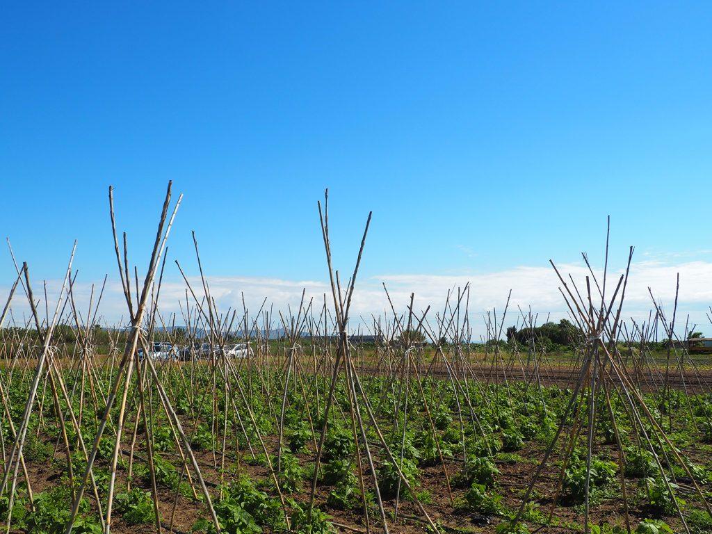 Diferentes metodologías de cultivo en el Baix Llobregat.