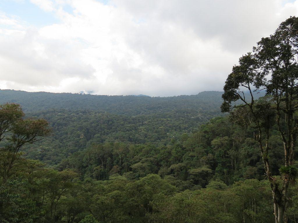 Hacía allí se dirigían mis pasos. Hacia el Parque Nacional Natural Cueva de los Guácharos. Foto: Johanna Páez Crespo.