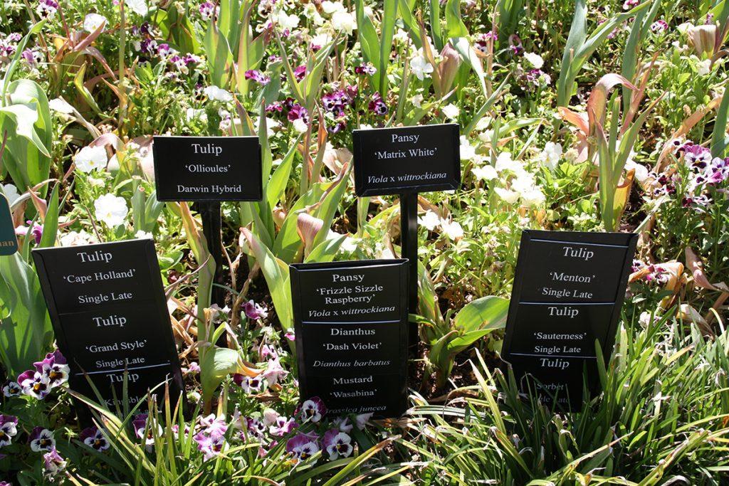 A veces, la acumulación de flores es tal, que difícilmente se puede diferenciar a que flor se refiere cada cartel.