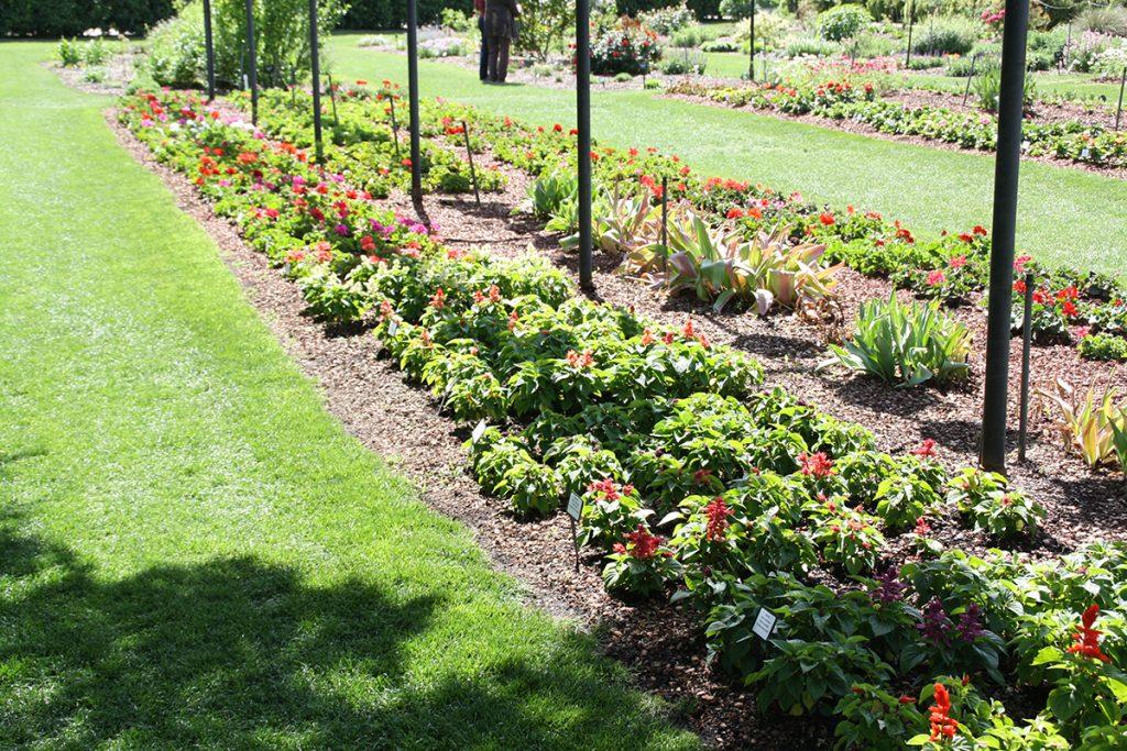Diferentes espacios de terreno dedicados a la variedad de color y formas de ciertos géneros. En esta foto, espacio dedicado a las Salvias.
