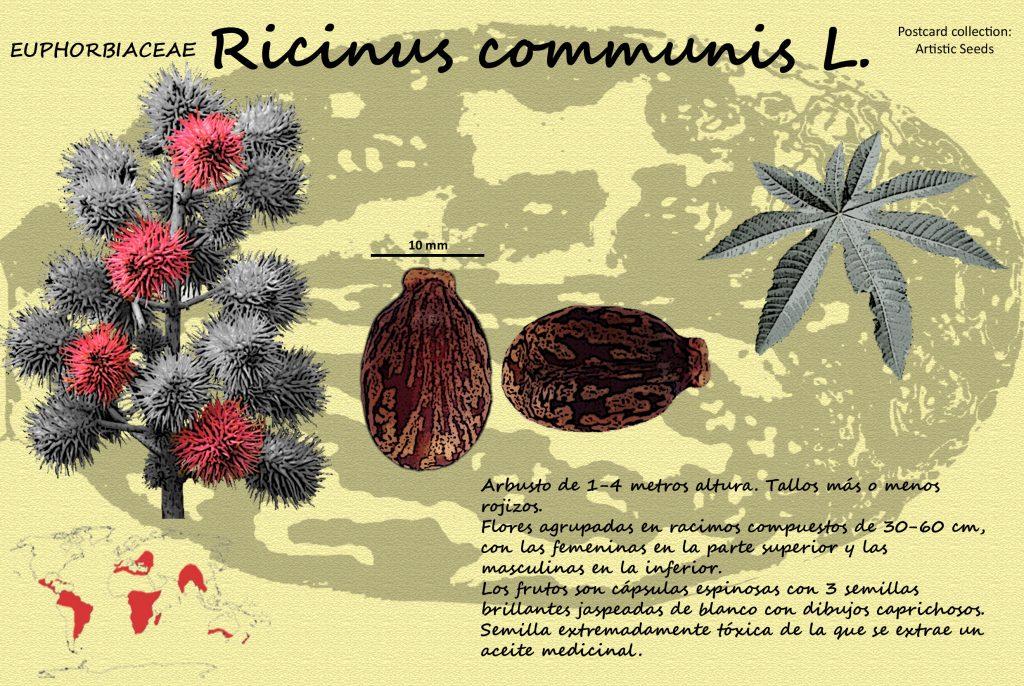 Postal dedicada al Ricino donde se puede observar la belleza de la ornamentación de sus semillas.