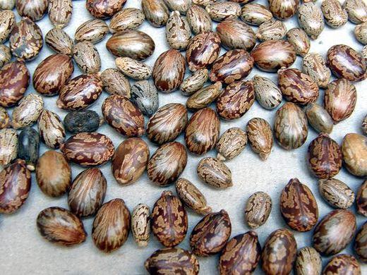 Preciosa ornamentación de las semillas de las que tantos usos se pueden extraer. Foto: sertox.com.ar