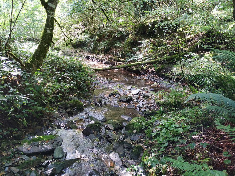 Muchos cursos de agua del Caurel que van a desembocar al río Pequeno muestran este frondoso aspecto.