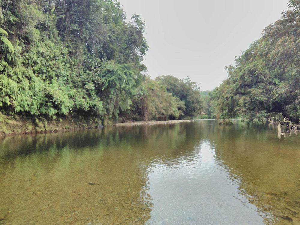La frondosidad de la selva custodia los cursos de agua con toda su biodiversidad.