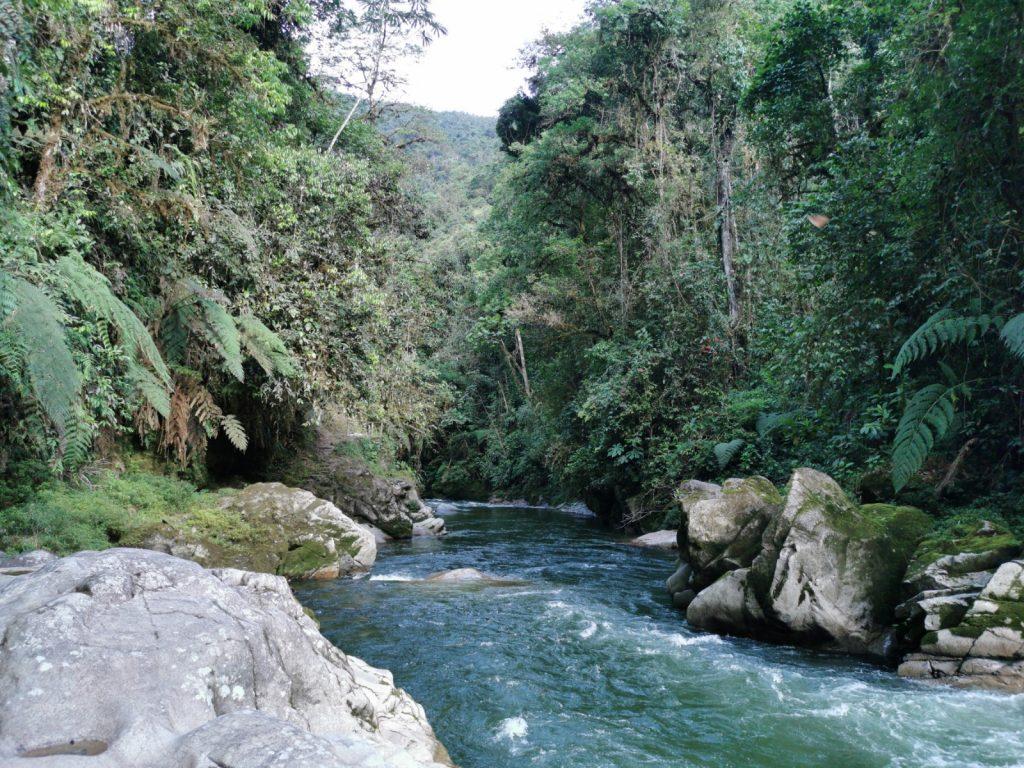 Brecha creada por el río Bombuscaro en la tupida selva del PN Podocarpus.