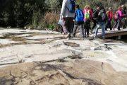 Arenas fósiles