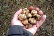 Patatas de tierra