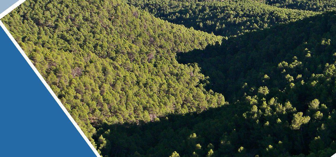 Bosque Escondido